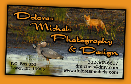 Dolores Michaels Photography